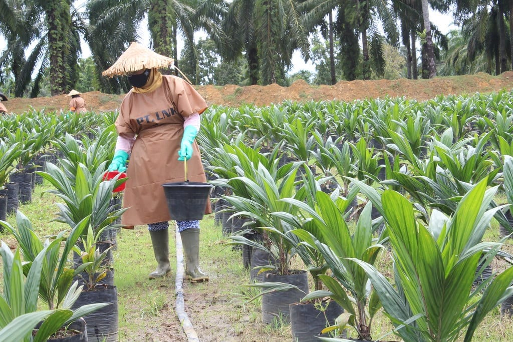 Case Study on Improving Management of Human Rights Risk in the Extended Palm Oil Supply Chain