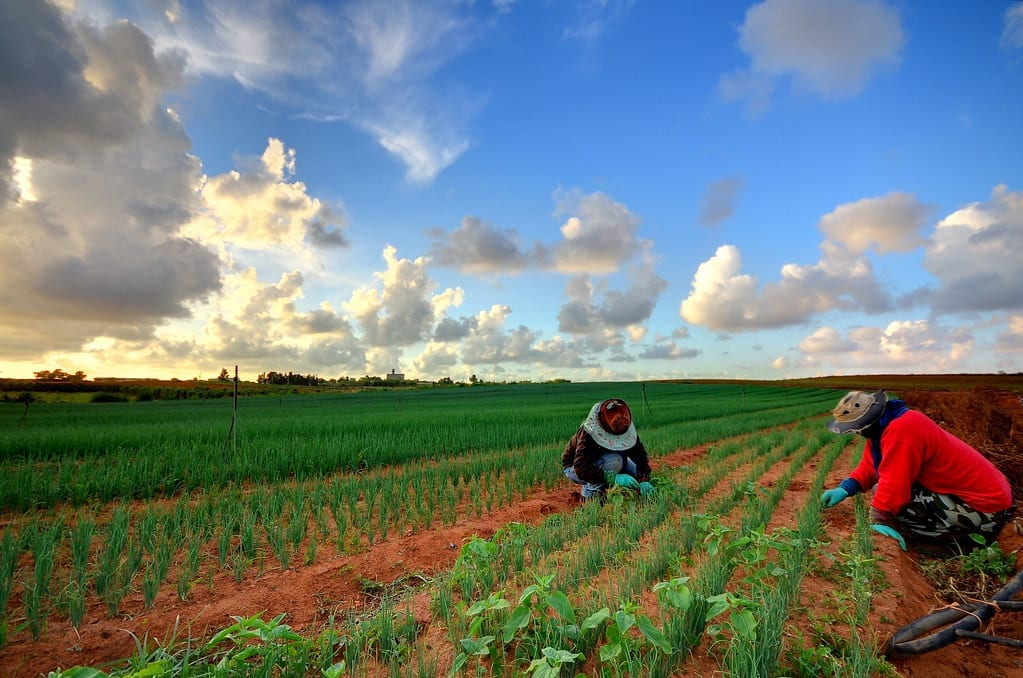 Tiempo de reforma: Abuso de las y los trabajadores agrícolas en el Programa de Visa H-2A