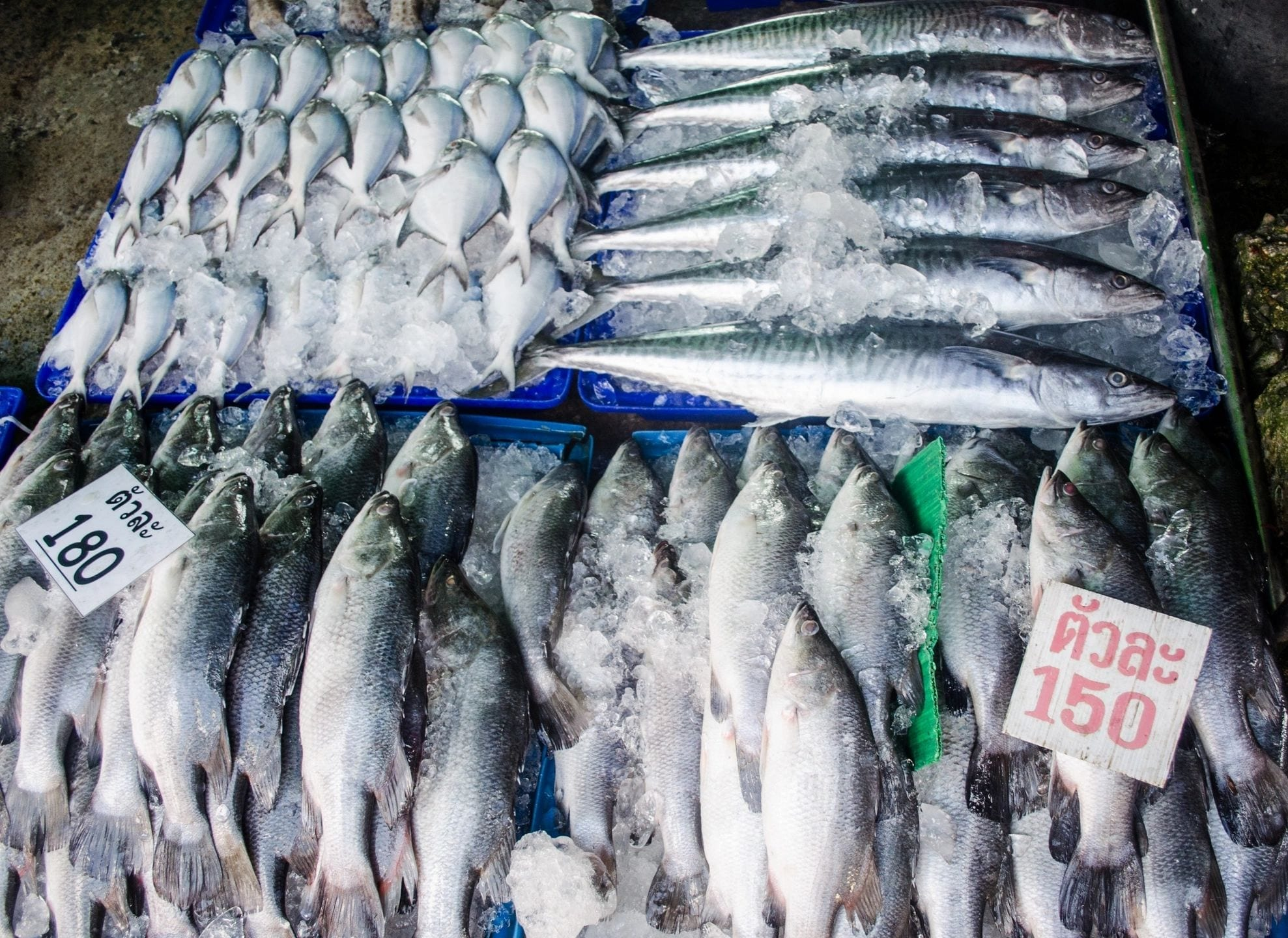 Satellites can reveal risk of forced labor in the world's fishing fleet